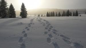 stopy-ve-snehu